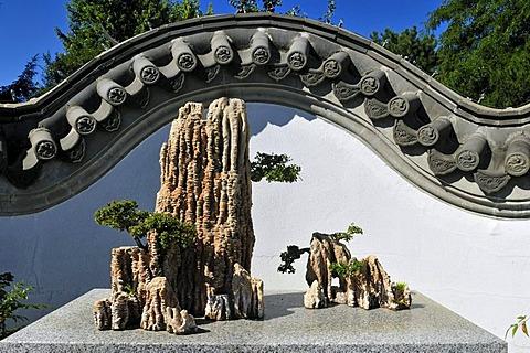 Bonsai collection, Chinese Garden, Jardin Botanique de Montreal, Botanical Garden of Montreal, Quebec, Canada, North America