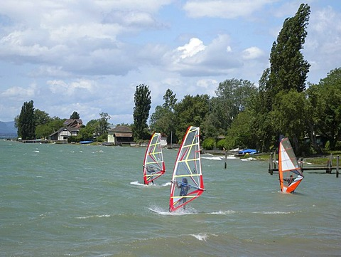 Windsurfers, Reichenau island, Lake Constance, Baden-Wuerttemberg, Germany, Europe