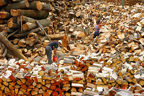 Firewood, Bio-Bio region, Chile, South America