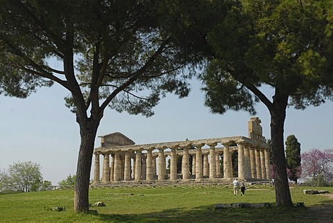 Temple of Ceres and pine trees in Paestum, Italy, Europe
