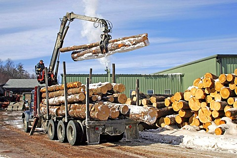 Logging, lumber mill, Springfield, New Hampshire, New England, USA