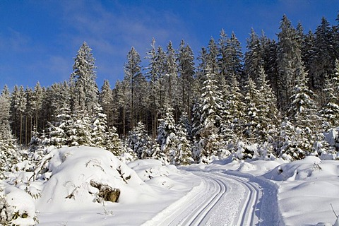 Cross-country ski trail in the snow-covered forest, Gutenbrunn Baernkopf biathlon and cross country ski center, Waldviertel, Lower Austria, Austria, Europe