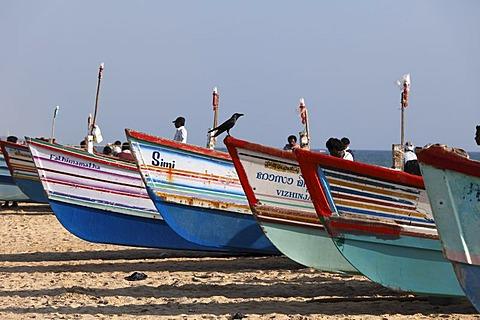 Colorful fishing boats on the beach, Somatheeram Beach, Malabarian Coast, Malabar, Kerala state, India, Asia