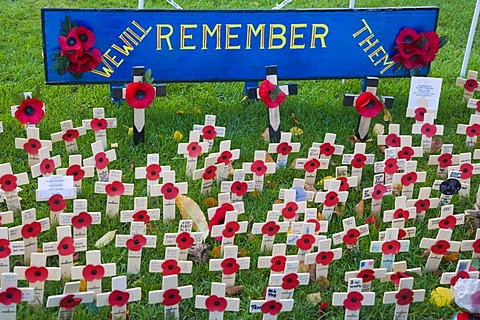 Field of Remembrance with red poppies on wooden crosses, Winchester, Hampshire, England, United Kingdom, Europe