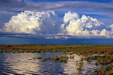 Huge cumulus cloud above the vast landscape of the Camargue, Alpilles in the back, Alpilles, Provence, southern France, France, Europe
