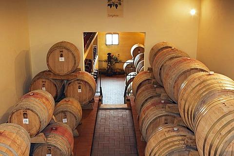 Vin Santo in the wine cellar in the Brunello winery, Fattoria dei Barbi, Podernovi, Montalcino, Tuscany, Italy, Europe
