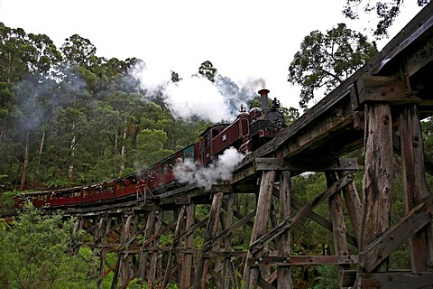 Puffing Billy Railway crossing the Trestle Bridge, built in 1899, The Dandenong Ranges, Victoria, Australia