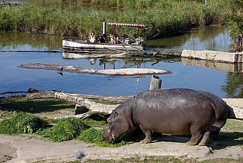 Hippo enclosure, Zoom Erlebniswelt zoo, Gelsenkirchen, Ruhrgebiet area, North Rhine-Westphalia, Germany, Europe