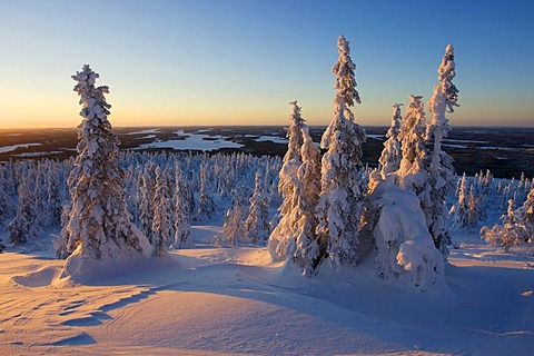 Winter landscape at Mt. Iivaara, Kuusamo region, Finland, Europe