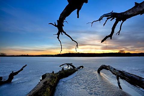 Old wood on icy Mindelsee lake, Baden-Wuerttemberg, Germany, Europe