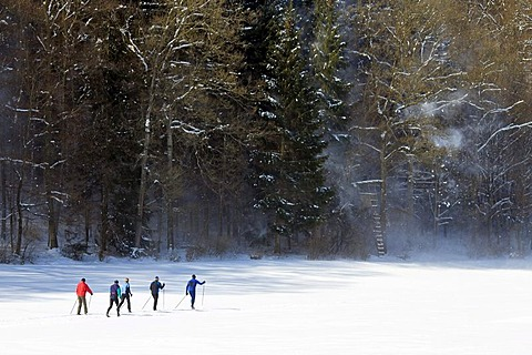 A group of cross-country skiers