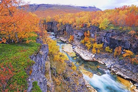 River in the autumnal Abisko Canyon, Abisko national park, Norrbotten, Lapland, Sweden, Scandinavia, Europe