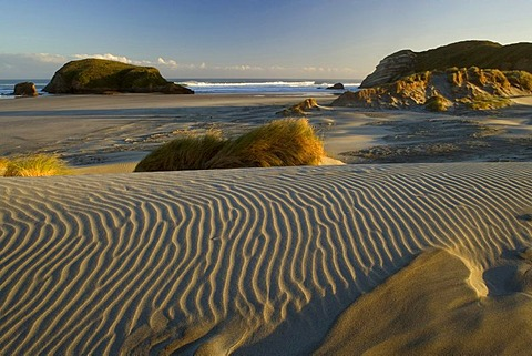 White sand dunes in the early morning light at Wharariki Beach, Golden Bay, Nelson District, South Island, New Zealand