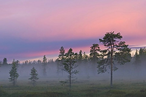 Fog in a swamp at sunset, Lapland, Sweden, Scandinavia, Europe - 832-171346