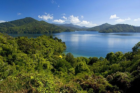 View of the Queen Charlotte Sound as seen from the Queen Charlotte Drive, Marlborough Sounds, South Island, New Zealand