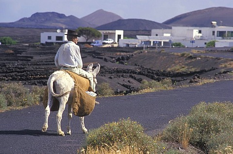 Farmer, old man, riding a donkey, Lanzarote, Canary Islands, Spain, Europe