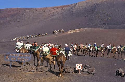 Camel ride, camel caravan in the Timanfaya National Park, tourists, volcanoes, lava, Lanzarote, Canary Islands, Spain, Europe