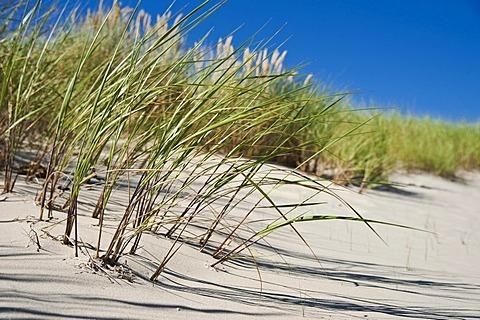 Dune landscape on Usedom island, Mecklenburg-Western Pomerania, Germany, Europe