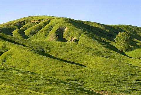 Green rolling farmland near Masterton, Wellington, in the southern part of the North Island of New Zealand