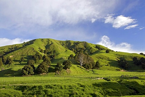 Green rolling farmland near Castlepoint, Wellington in the southern part of the North Island of New Zealand