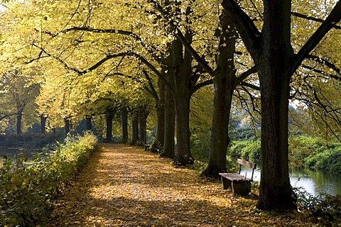 Tree-lined avenue at the Stever river in Luedinghausen, Muensterland region, North Rhine-Westphalia, Germany, Europe