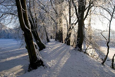 Avenue of trees on the castle moat of Burg Vischering in winter, Luedinghausen, Muensterland, North Rhine-Westphalia, Germany, Europe