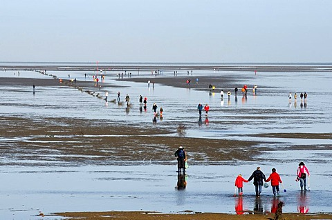 Low tide in the Wadden Sea, Duhnen district, North Sea resort Cuxhaven, Lower Saxony, Germany, Europe