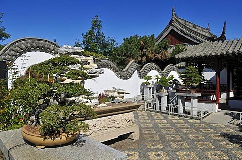 Bonsai tree, Chinese Garden, Jardin Botanique de Montreal, Botanical Garden of Montreal, Quebec, Canada, North America