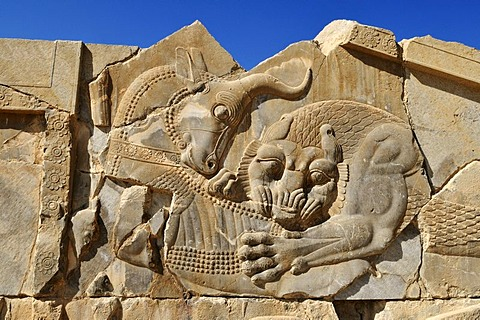 Bas-relief of a fighting bull and lion at the Achaemenid archeological site of Persepolis, UNESCO World Heritage Site, Persia, Iran, Asia