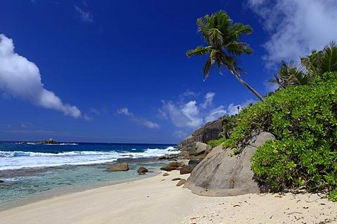 Coconut palm (Cocos nucifera) and granite rocks on Anse Cache beach, Mahe island, Seychelles, Africa, Indian Ocean