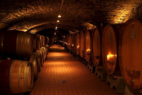 Wine cellar with oval-shaped wooden wine barrels