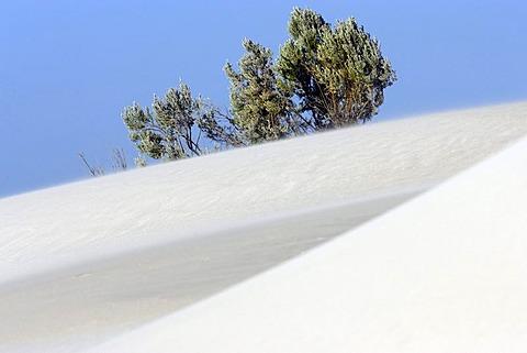 Coastal white sand dunes, Western Australia, Australia