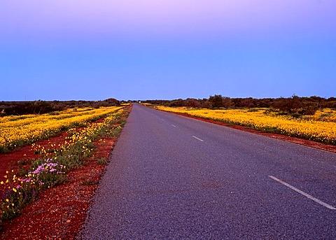 Road to Shark Bay, Northwest Australia