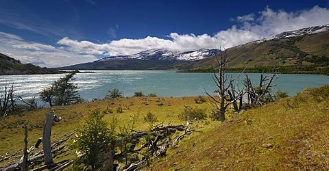 Dead trees, Laguna Verde, Green Lagoon, Patagonia, Chile, South America