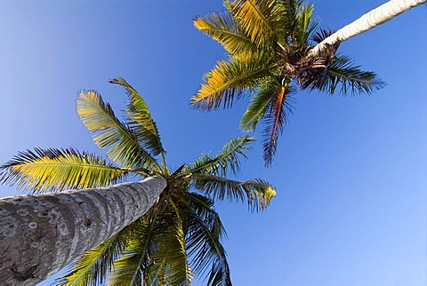 Palm trees at Playa El Agua beach on the island of Isla Margarita, Venezuela, South America