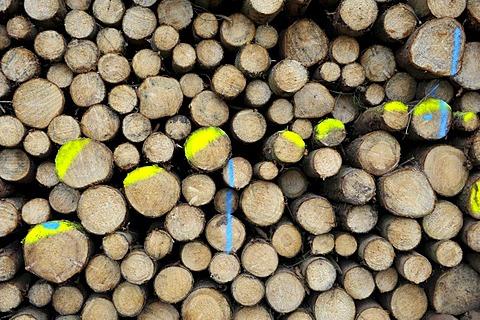 Felled tree trunks, marked