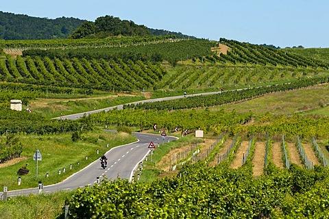 Country road through the vineyards of Baden near Vienna, Lower Austria, Austria, Europe