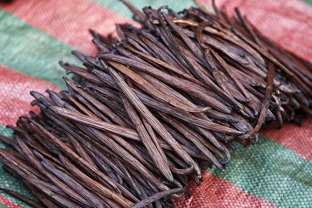 Vanilla capsules (Vanilla planifolia) drying, Manakara, East Coast, Madagascar, Africa