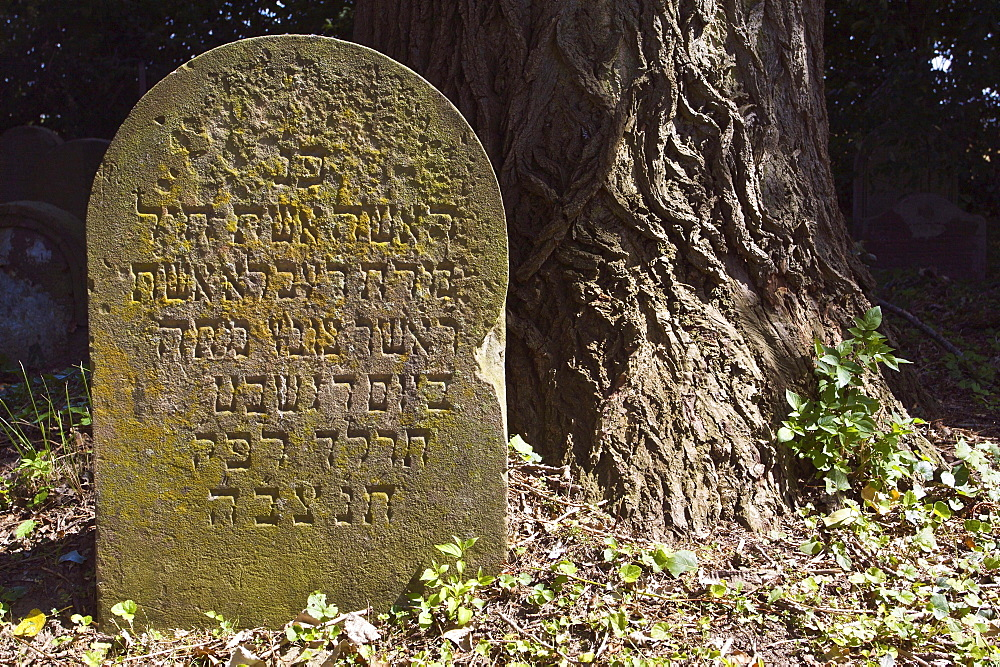 Gravestone in the Jewish cemetery in Bonn Schwarz-Rheindorf, North Rhine-Westphalia, Germany, Europe