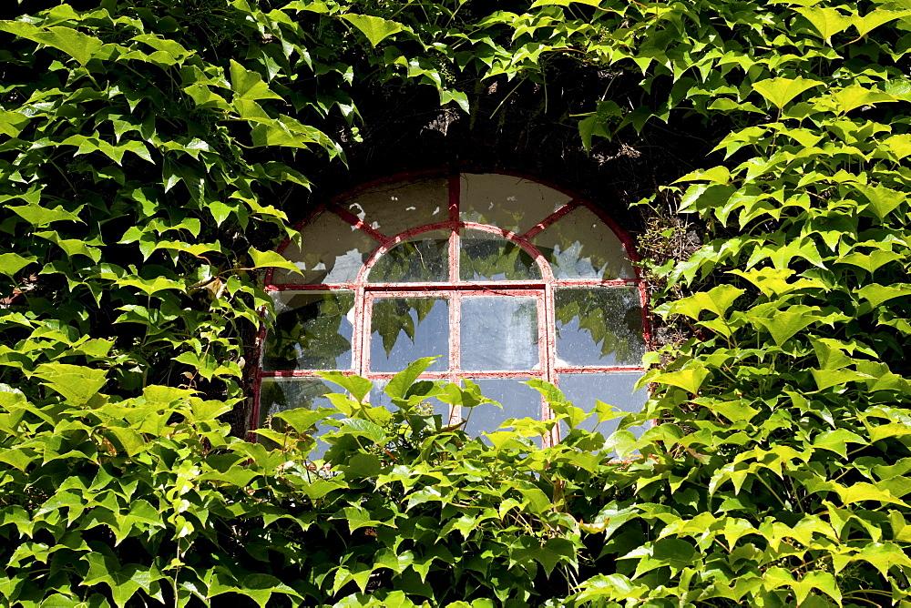 """Wild wine growing on an old house facade, Kuenstlerzeche """"Unser Fritz"""" artist's center, Herne, North Rhine-Westphalia, Germany, Europe"""