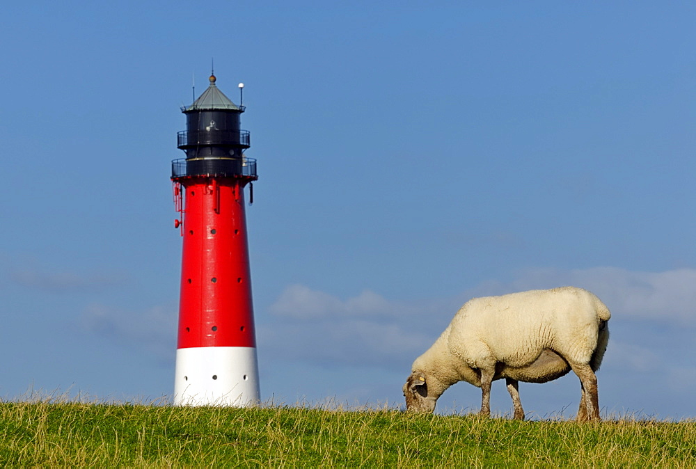 Pellworm Lighthouse and a sheep on a dyke, North Frisian Islands, North Friesland district, Schleswig-Holstein, Germany, Europe