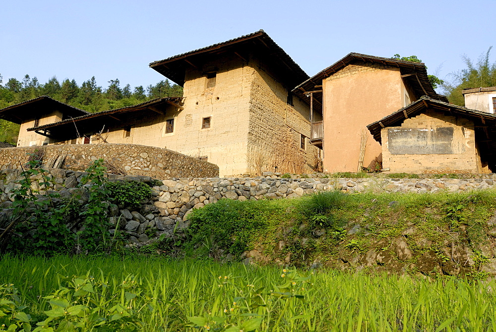 Adobe houses, earth houses, Chinese: Tulou, of the Hakka minority as a farm with a rice field terrace at Hukeng, Chinese minority, Fujian, China, Asia
