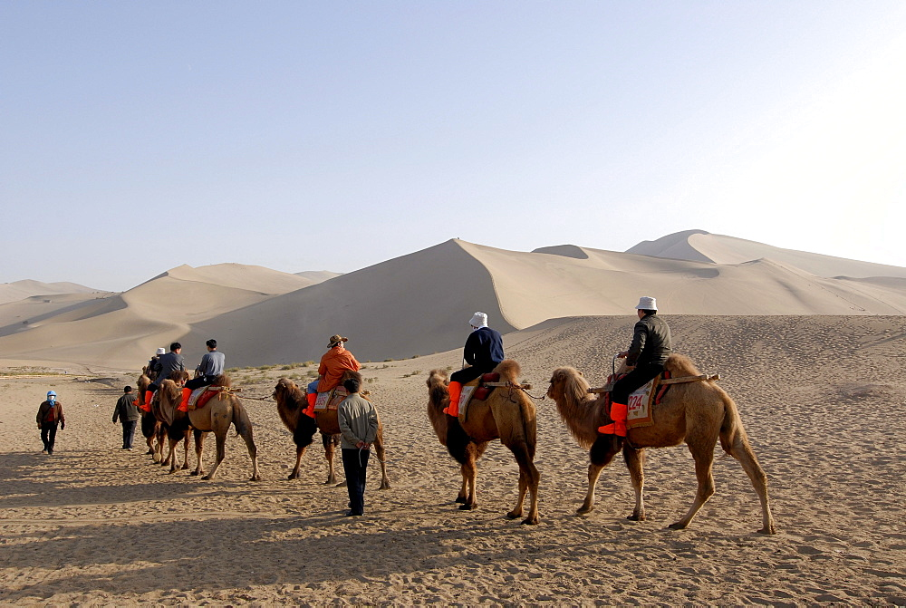 Camel caravan with tourists in front of the sand dunes of the Gobi Desert and Mount Mingshan near Dunhuang, Silk Road, Gansu, China, Asia