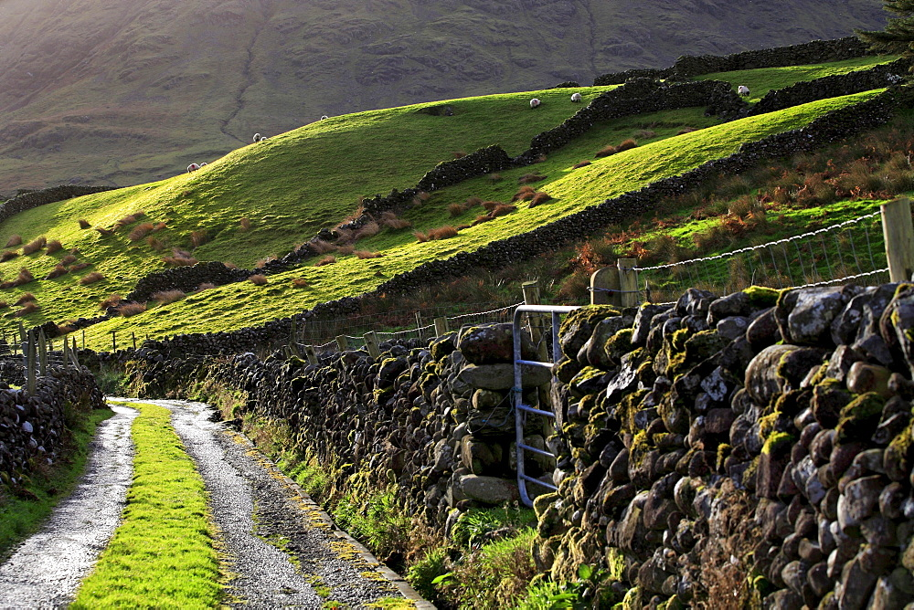 Stone wall fences and farmers road, Republic of Ireland, Europe