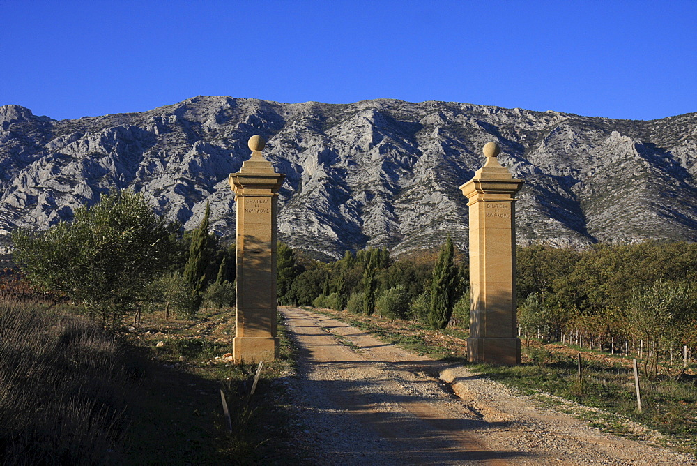 Driveway of the Chateau Maupague winery, in front of Montagne Sainte-Victoire mountains, Provence, Southern France, France, Europe