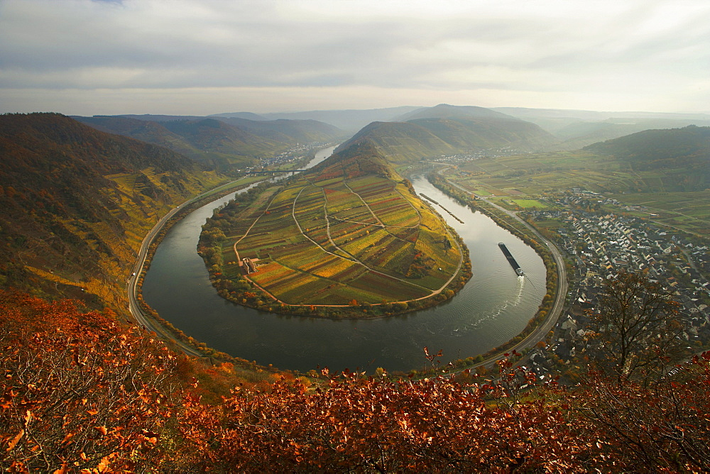 Moselschleife, curve of the Mosel River near Bremm in autumn, Rhineland-Palatinate, Germany, Europe