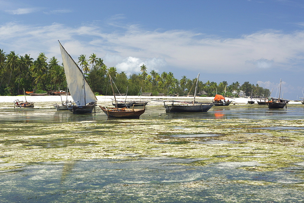 Dhow boats in the harbour of Nungwi, Zanzibar, Tanzania, Africa