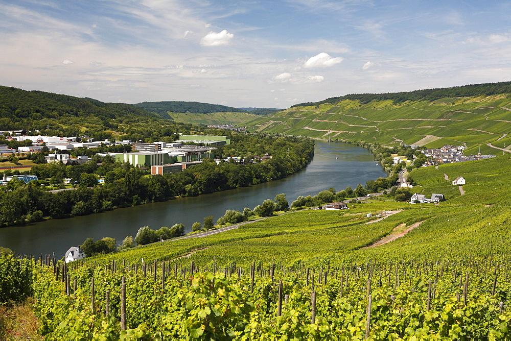 Overlooking the Moselle landscape near Bernkastel-Kues, Rhineland-Palatinate, Germany, Europe
