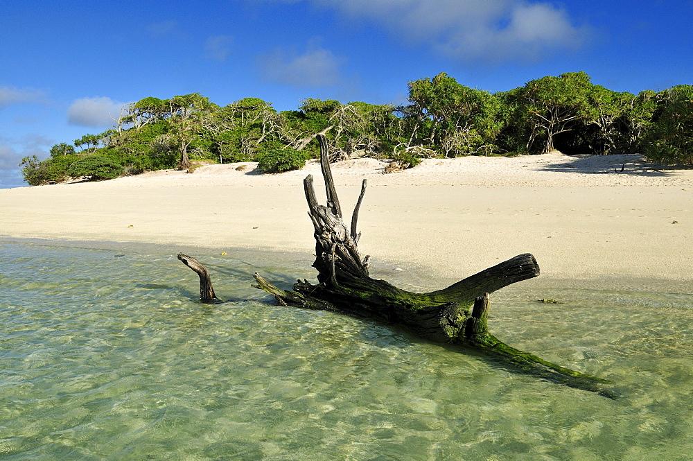 Driftwood on a sandy beach of Heron Island, Capricornia Cays National Park, Great Barrier Reef, Queensland, Australia