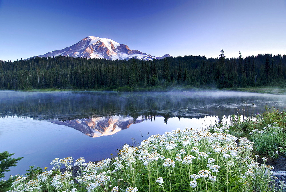 Mt Rainier reflected in a lake, flower meadow at front, Mount Rainier National Park, Washington, USA, North America
